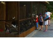 Пансионат «Фея-3», зоопарк